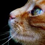 Katt Pixabay