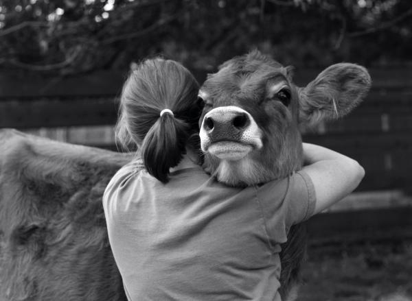 cowhug