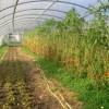 Vegansk jordbruk - Tolhurst Produce