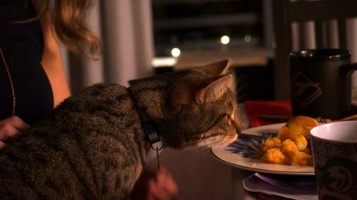 katt strekker hals etter maten.jpg