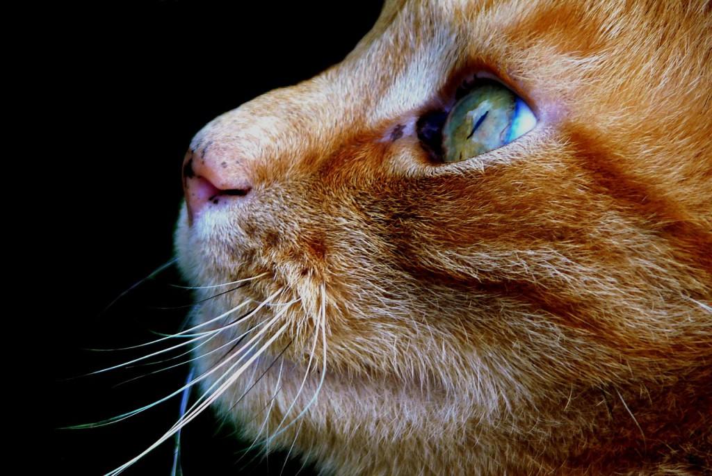 Katt. Foto.