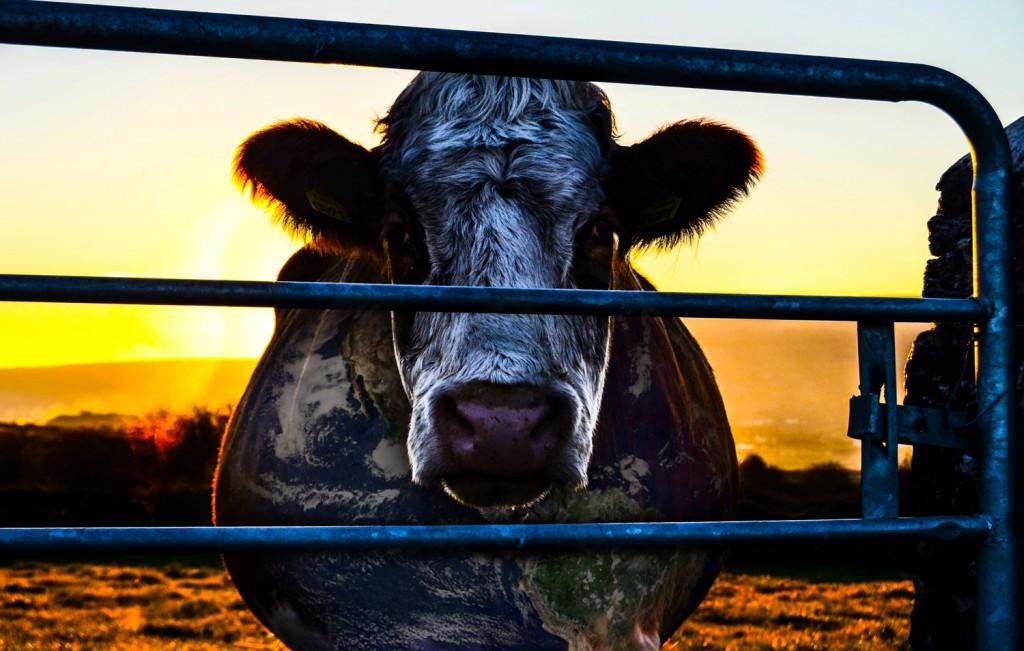 Cowspiracy. Foto.