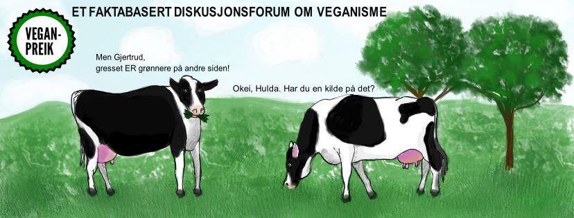 Er gresset virkelig grønnere på den andre siden? Illustrasjon: Lise Mari Lorentzen (hentet fra Facebook-gruppa Veganpreik)